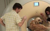 تولید تصاویر MRI در چند دقیقه با هوش مصنوعی