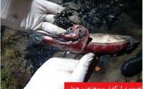 قتل زن جوان با کفش های زرشکی در مشهد