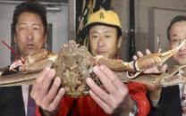 این خرچنگ را دیشب 529 میلیون تومان فروختند(+تصاویر)