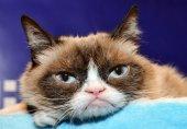 گربه مولتی میلیونر اینستاگرامی مرد