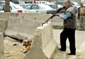 کشتار سگها با آمپول اسید با توییت عضو شورای شهر تهران تایید شد